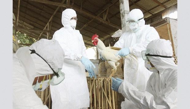 Muere mujer contagiada con gripe aviar en China