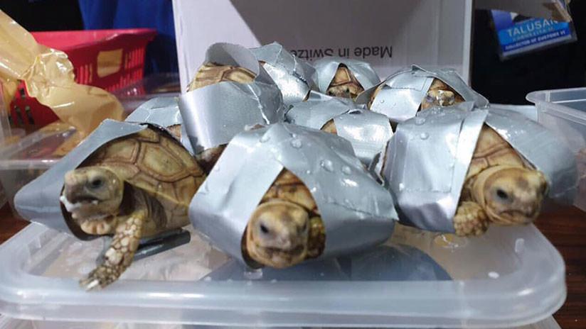 Encuentran más de 1.500 tortugas vivas en maletas abandonadas en un aeropuerto de Filipinas
