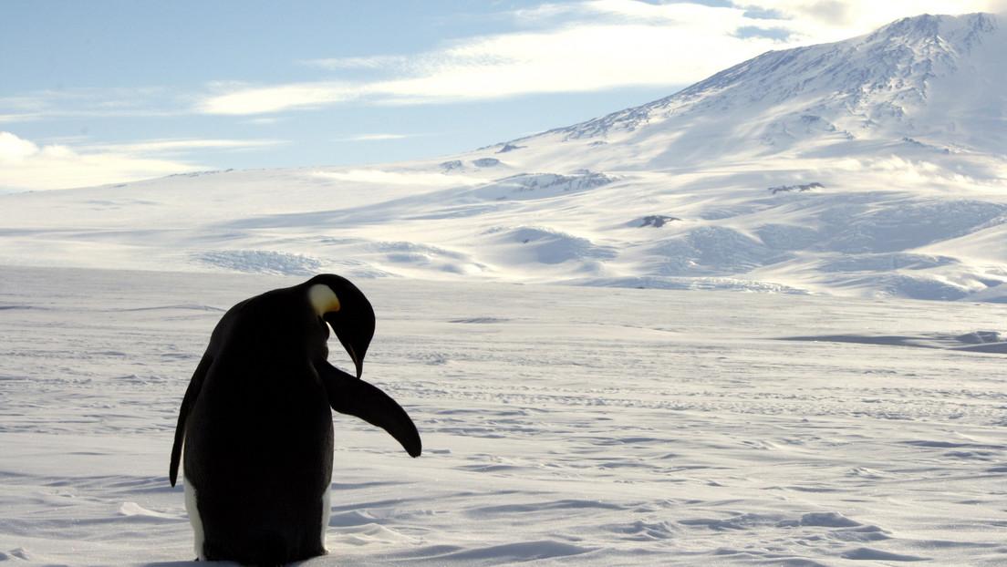 Se registra por primera vez una 'ola de calor' en la Antártida