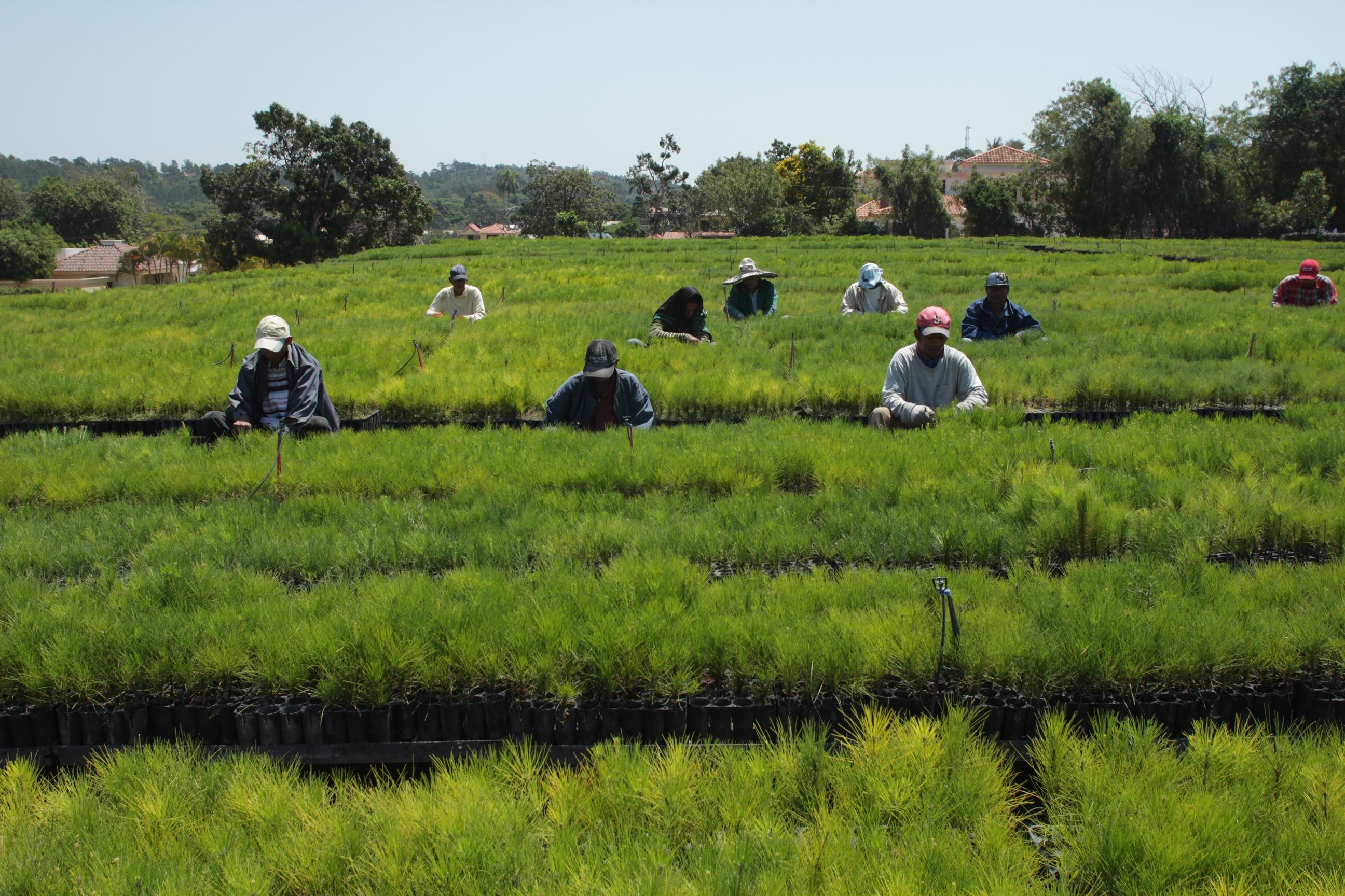 Estado dominicano recibirá financiamiento de la AFD para continuar el Plan Sierra