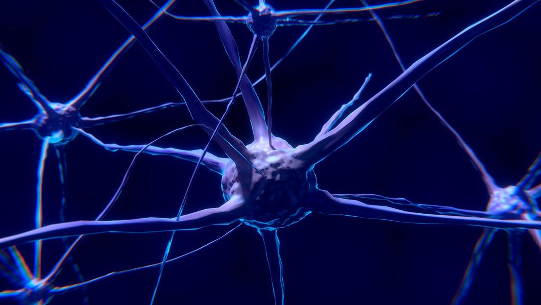 Científicos rediseñan una proteína para combatir el cáncer o regenerar neuronas