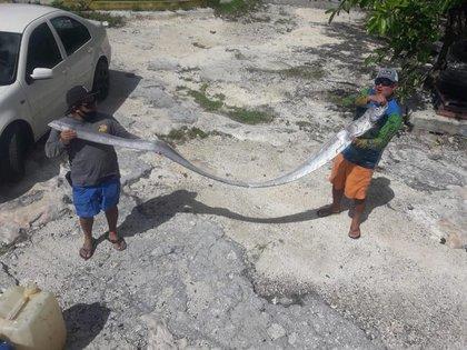 Pez remo: la criatura marina que apareció en Cozumel y se asocia a terremotos y tsunami