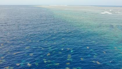 Las espectaculares imágenes desde un dron de decenas de miles de tortugas en la Gran Barrera de Coral