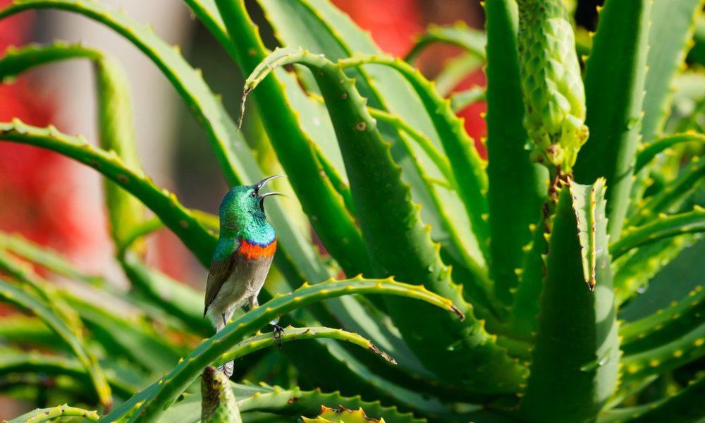 Descubren cómo se comunican las plantas mediante señales subterráneas