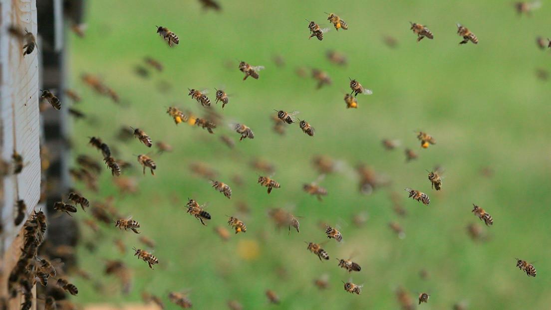 Video | Miles de abejas invaden una playa en EE.UU.