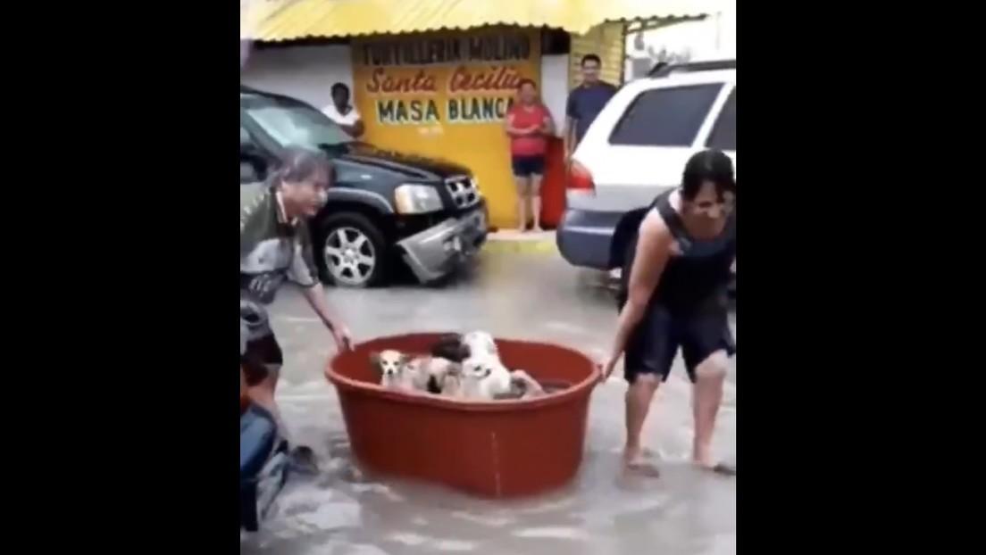 Video | Una pareja mexicana rescata con una tina perros en las calles inundadas y se hace viral