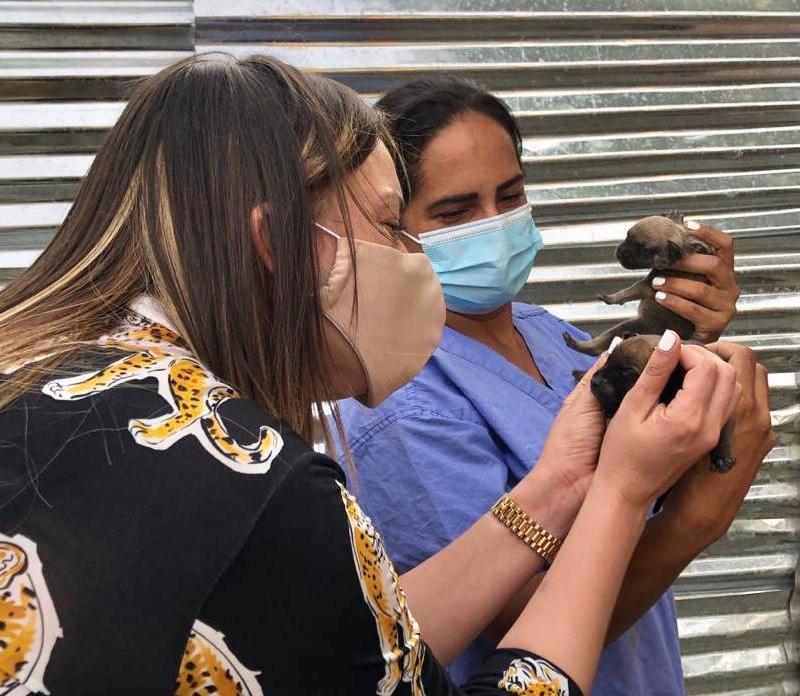 Hony Estrella da un paso a favor de refugio para animales rescatados