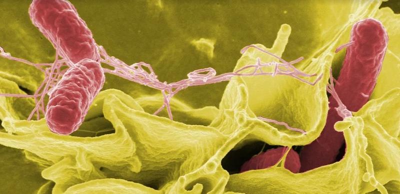 EE.UU.: Investigan un brote de salmonela en 23 estados del país
