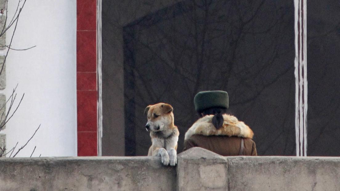 Medio surcoreano: Kim Jong-un prohibió tener perros como mascota en Corea del Norte