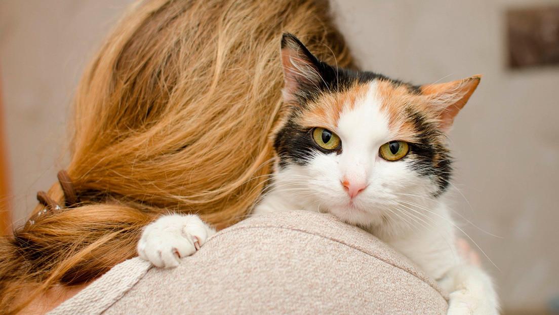 Científicos descubren que un medicamento para gatos puede combatir el coronavirus en humanos