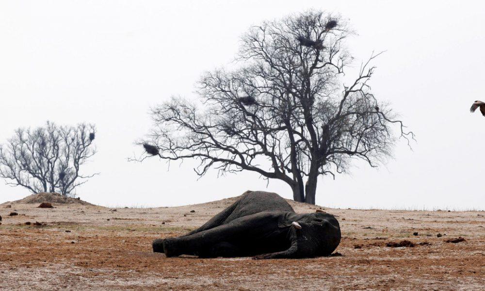 Encuentran once elefantes muertos en una reserva de Zimbabue