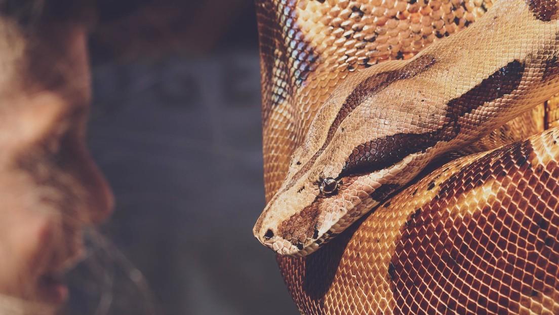 Se viraliza el video de unos médicos que logran extraer una serpiente de más de un metro de la garganta de una mujer