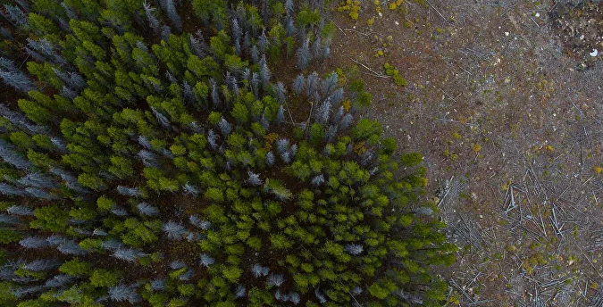 Brasil suspende todas las acciones contra deforestación en la Amazonía