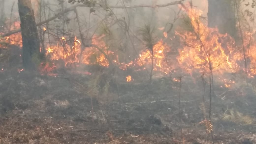 Brigadas militares combaten incendio en Bahoruco junto a personal de Medio Ambiente y Obras Públicas
