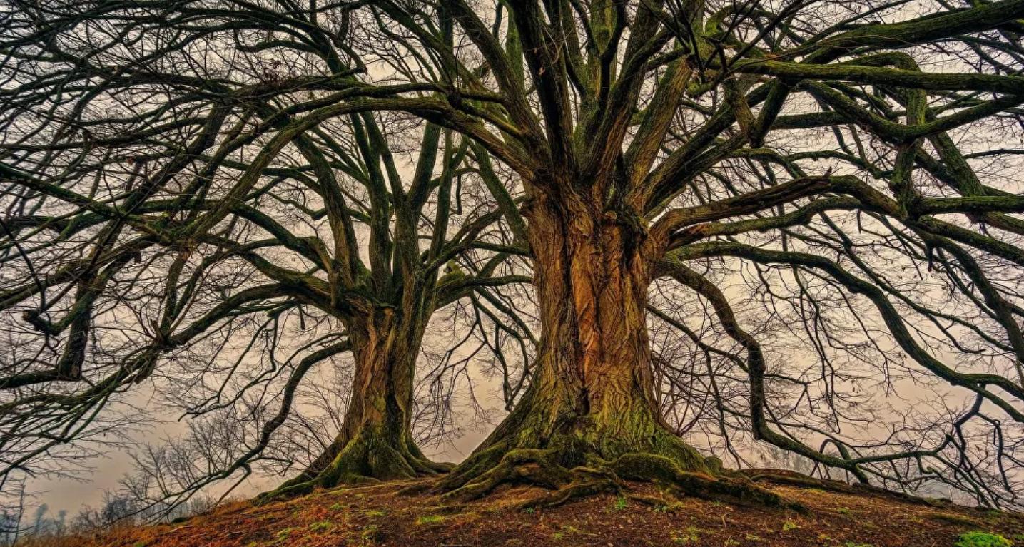 Un árbol de 10 millones de años hallado en Perú revela una sorpresa inesperada sobre el clima