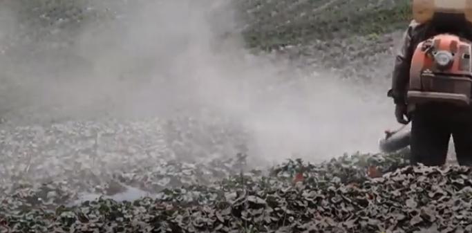 Video | Lluvia de ceniza volcánica continúa afectando a pobladores en Ecuador