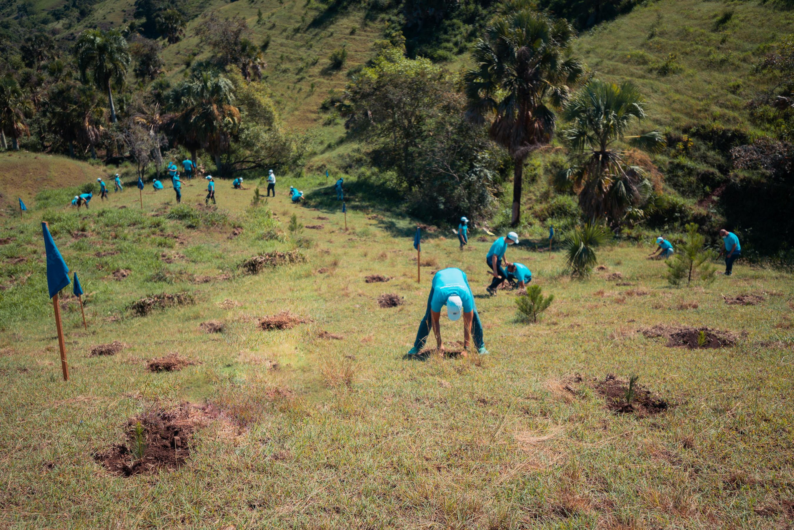 Video | Banco Popular y Plan Sierra realizan jornada de reforestación en SAJOMA