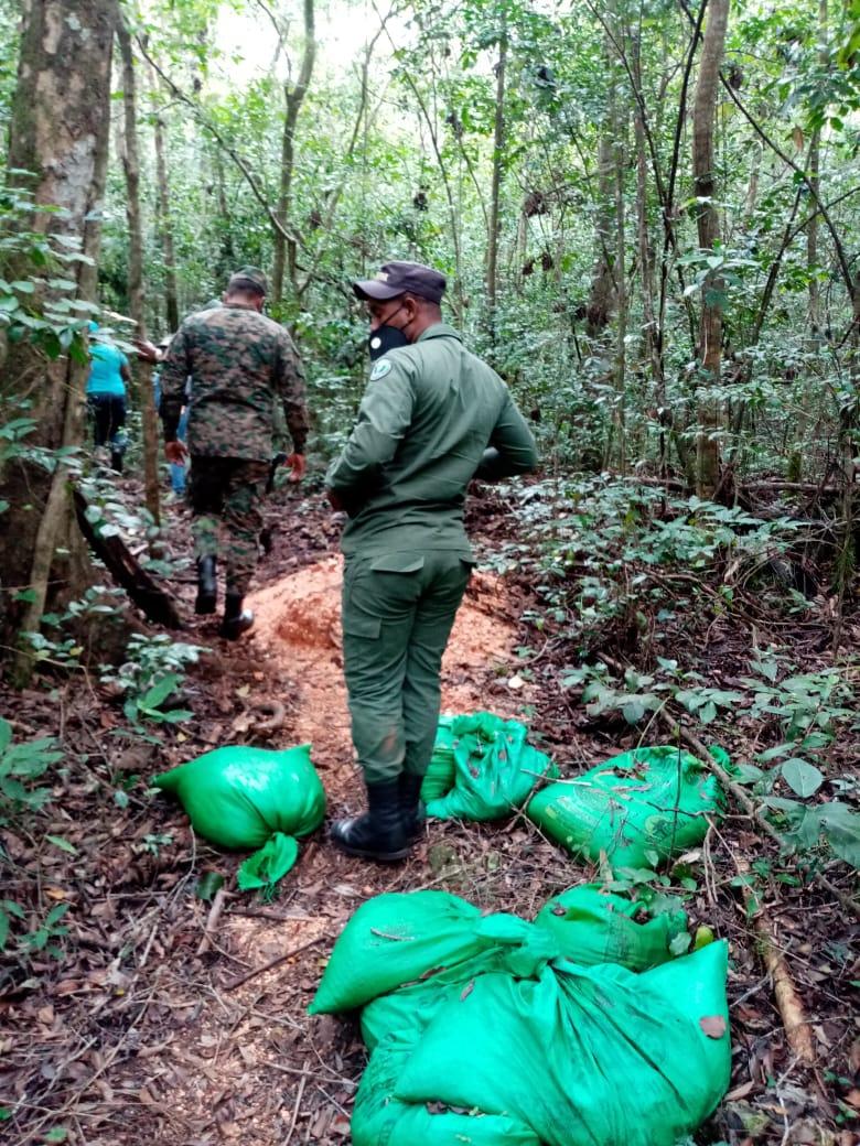 Medio Ambiente elimina 2,000 matas de aguacate sembrados ilegalmente en Sierra de Bahoruco
