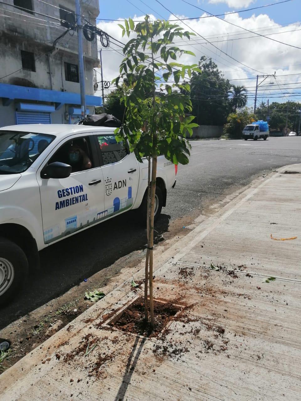 ADN continúa programa de reforestación en las tres circunscripciones de la Capital