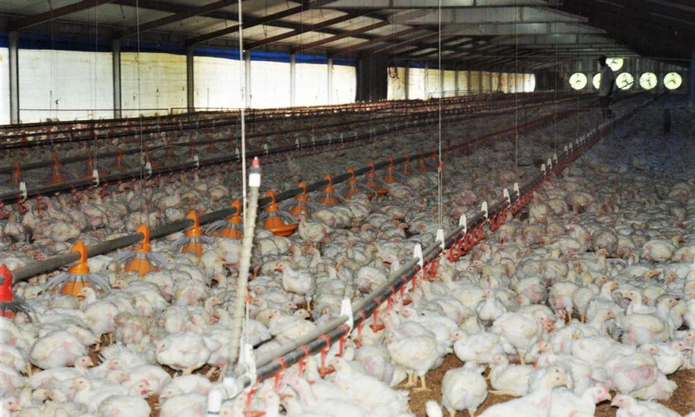 Agricultura anuncia habrá productos suficientes para suplir demanda navideña