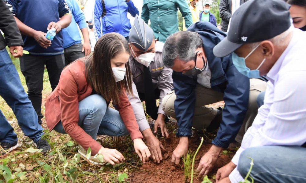 Medio Ambiente plantó tres mil pinos criollos en Ocoa