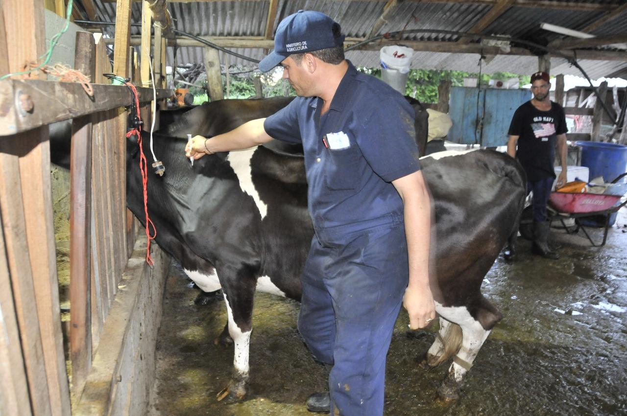 Gobierno comienza jornada gratuita de vacunación de ganado