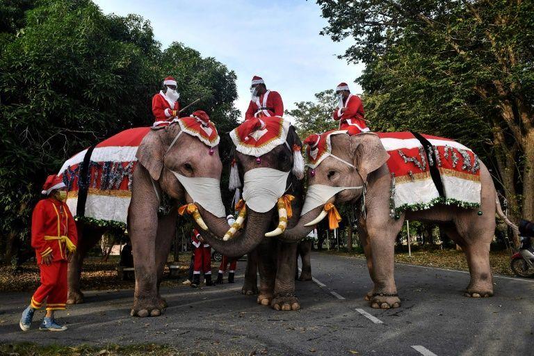 Elefantes vestidos de Papá Noel reparten mascarillas en una escuela de Tailandia