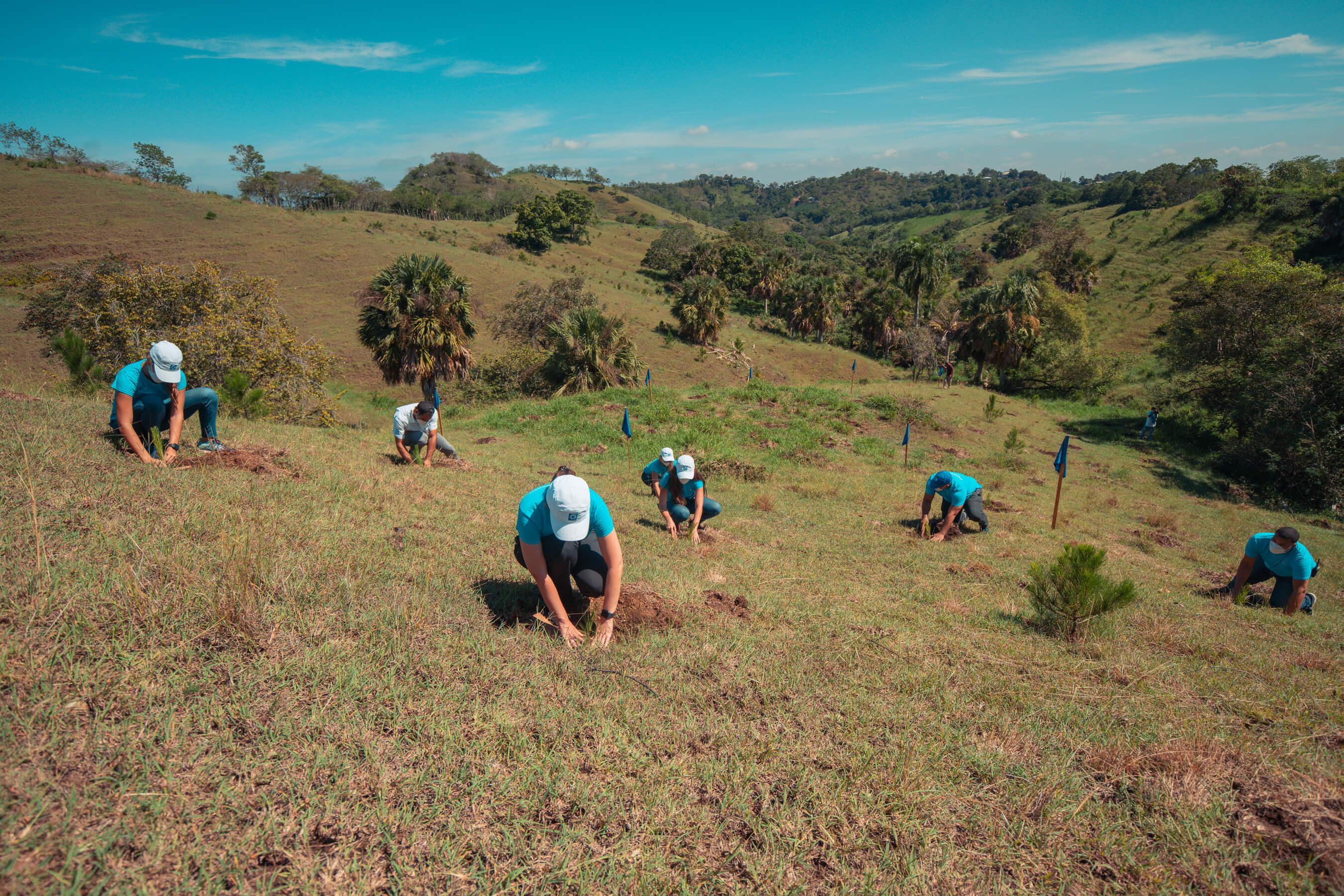 Banco Popular y aliados siembran más de 320,000 árboles en el 2020