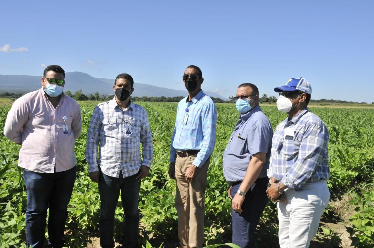 Gobierno dispone más de RD$50 MM de pesos a tasa cero para sembrar habichuelas en San Juan