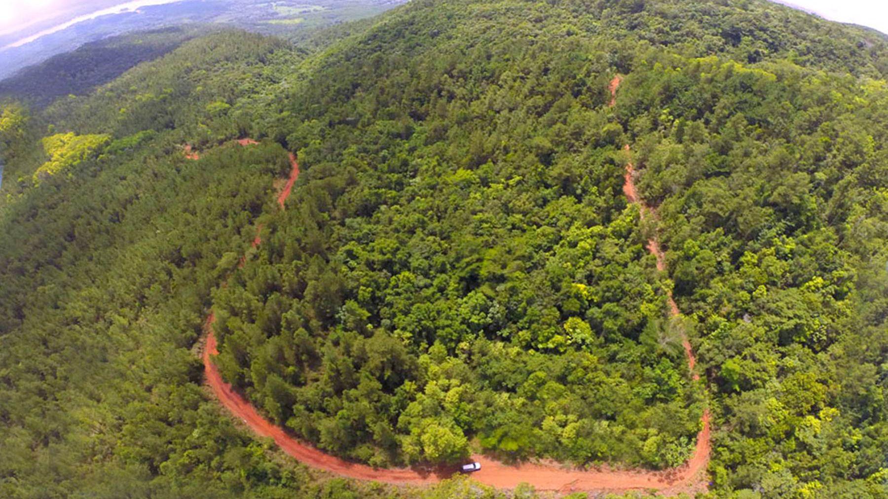 Ministro de Ambiente ordena suspender tala de árboles en Loma Miranda