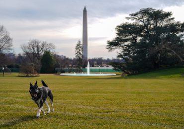 Vuelven las mascotas presidenciales a la Casa Blanca