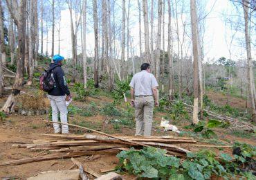 Someten a la justicia a hombre por tala de más de 1,700 árboles en Yamasá