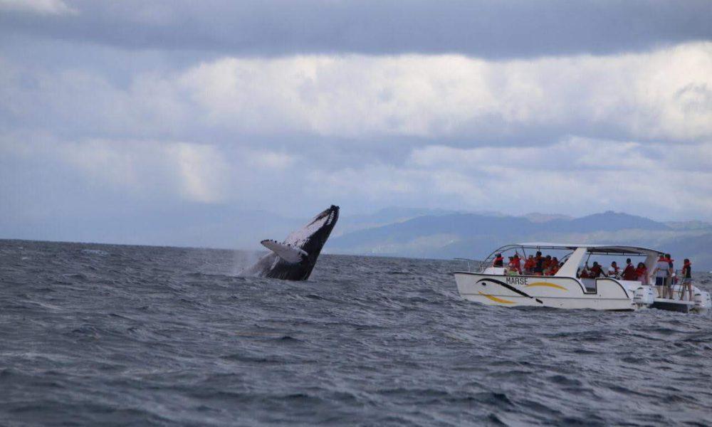 Medio Ambiente inicia temporada de observación de ballenas bajo protocolo sanitario