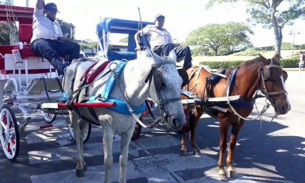 VIDEO | Cocheros de Santiago opuestos al cambio de caballos por carros eléctricos