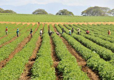 Productores de tomate recibirán ayuda para mejorar la productividad del rubro
