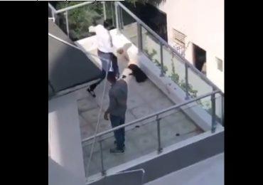 VIDEO | Ciudadano pide a las autoridades encontrar a hombre que maltrata a un perro