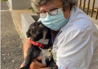 Ministerio Público amplía investigación sobre maltrato a perrita en Bella Vista