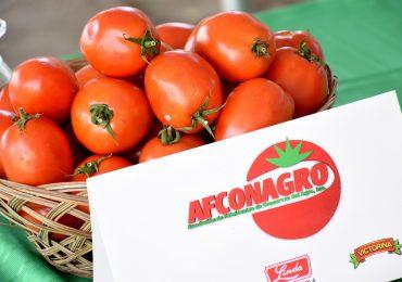 Inicia zafra de tomate industrial en Azua