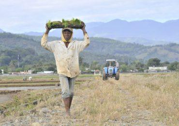 Precios del arroz se mantendrán estables