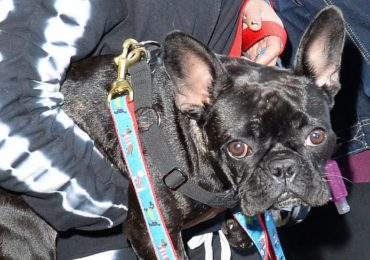 Lady Gaga ofrece 500 mil dólares a quién dé con el paradero de sus dos perros robados