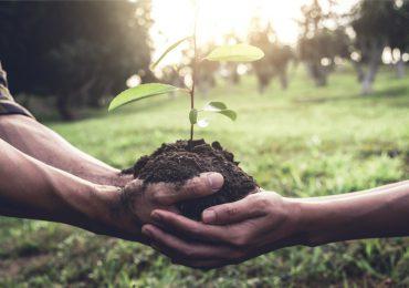 Scotiabank y Mastercard se comprometen a plantar 100 millones de árboles en cinco años