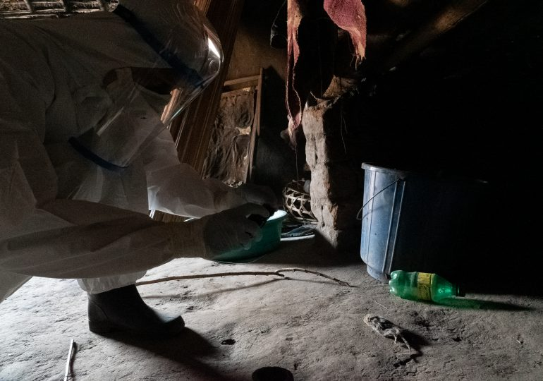 Tras la pista de uno de los brotes de peste más antiguos del mundo en el Congo