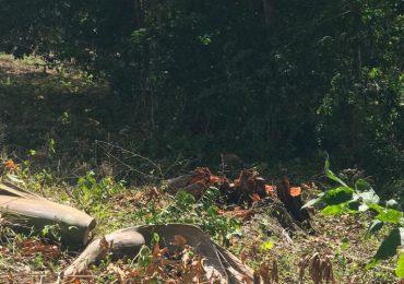 VIDEO | Regidor realiza tala indiscriminada de árboles; amenaza supuesto denunciante