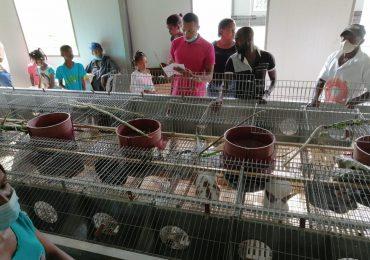 Cooperativa Las Mercedes suspende proyecto de conejo por alto costo