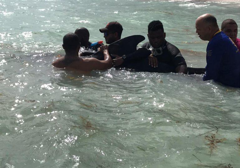 Rescatan ballena herida varada en playa de un hotel de Bávaro
