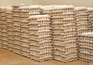 Sector avícula será intervenido para estabilizar precios del huevo