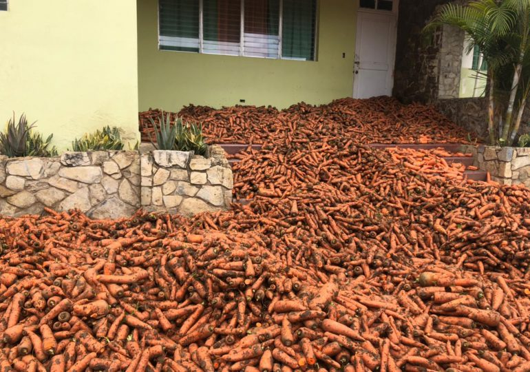 Agricultores de Constanza lanzan sus cosechas de zanahorias en protesta por exceso de importaciones