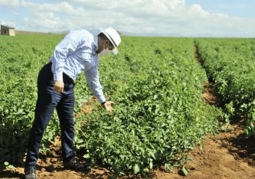 VIDEO | Gobierno invierte más de RD$767 millones a la agropecuaria en seis meses en el sur del país