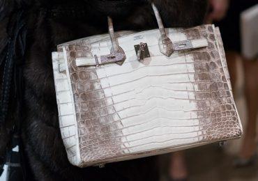 ¡Insólito! Empresas de artículos de lujo crían cocodrilos para producir carteras en Australia