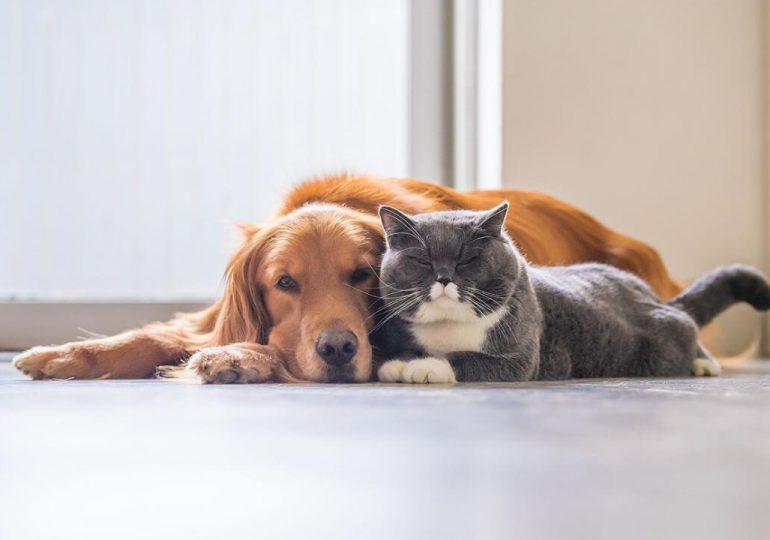 Artículo | ¿El mejor amigo del hombre es un enemigo del planeta?